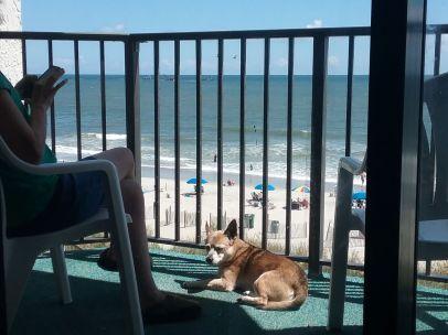 Sparky & Tamara -beach